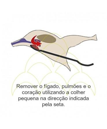 Colher de Evisceração - Aço Inox: Ilustração de como usar a colher pequena