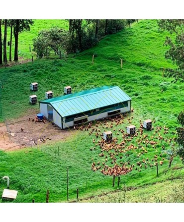 Curral Móvel - 6x10m: Perspectiva aérea; Instalado numa quinta com galinhas no exterior